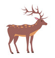 male deer view from left isolated vector image vector image