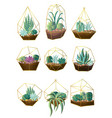 set green colorful succulent plant pot for home vector image vector image
