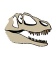 fossil dinosaur head skeleton lizard animal bone vector image