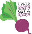 Plant A Radish vector image vector image