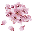 Soft Pink Sakura Flowers vector image