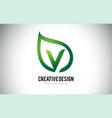 v leaf logo letter design with green leaf outline vector image vector image
