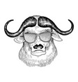 hand drawn head bull vector image vector image