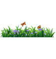isolated nature grass on white background vector image