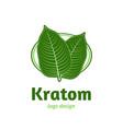 mitragyna speciosa kratom leaf logo template vector image vector image
