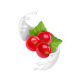 redcurrant in yogurt splash milk ice cream vector image vector image