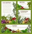 spice or herb farm market seasonings sketch vector image vector image