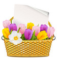basket with tulips vector image