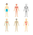 cartoon color human anatomical system set vector image