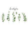 isolated set eucalyptus branches and leaves vector image vector image