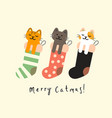 sock with christmas cats vector image vector image