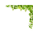 white grape branch in corner vector image vector image
