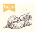 Hand drawn lemon sketch vector image