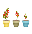 Ripe Olives on Branch in Ceramic Flower Pots vector image vector image