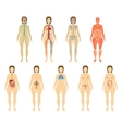 Set woman organs and systems of the body vitality vector image vector image