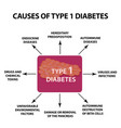 the causes of diabetes type 1 infographics vector image vector image