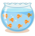 golden fish in the tank vector image
