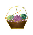 violet succulent plant and green colorful cactus vector image