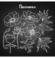 Collection of graphic anemones vector image vector image