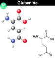 Glutamine proteinogenic amino acid vector image vector image