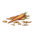 Hand drawn carrots vector image vector image