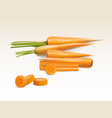 realistic of orange carrot vector image vector image