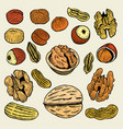 set of hand drawn nuts vector image