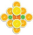 lemon orange lime grapefruit slices on white vector image