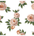 seamless pattern with english roses vector image