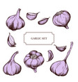 collection of hand drawn garlic highly vector image