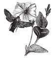 humming bird hawk moth vintage vector image vector image