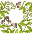 allspice branch frame vector image