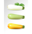 green whhite and yellow zucchini set realistic vector image