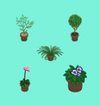 isometric houseplant set of flowerpot plant tree vector image