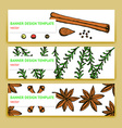 Sketch spices and herbs banners in vintage style vector image vector image