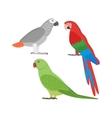Cartoon parrots set vector image vector image