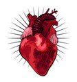 human heart in tattoo style vector image