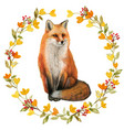 watercolor realistic red fox in a fall wreath vector image vector image