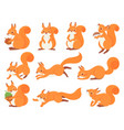 cartoon squirrel cute squirrels with red furry vector image vector image