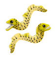 cartoon yellow-margined moray eel or gymnothorax vector image vector image