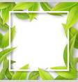 green mellow leaves and white frame vector image vector image