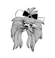 yorkshire terrier with bow and modern stylish vector image