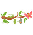 cartoon butterfly life cycle caterpillar vector image vector image