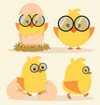 cartoon cute chick set vector image