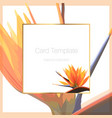 Exotic tropical bright orange strelitzia bird of