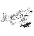 fish perch vector image vector image