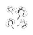 hand drawn cotton cotton flower buds in vector image vector image