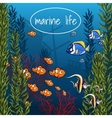Marine life in bright colors vector image vector image