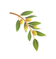 olive tree branch in cartoon vector image
