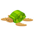 3d design for sea turtle vector image